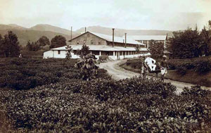 OLD-ceylon-tea-industry-3