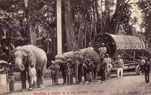 OLD-ceylon-tea-industry-4